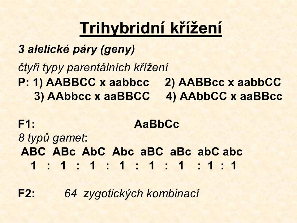 Trihybridní křížení 3 alelické páry (geny) čtyři typy parentálních křížení P: 1) AABBCC x aabbcc 2) AABBcc x aabbCC 3) AAbbcc x aaBBCC 4) AAbbCC x aaBBcc F1: AaBbCc 8 typů gamet: ABC ABc AbC Abc aBC aBc abC abc 1 : 1 : 1 : 1 : 1 : 1 : 1 : 1 F2: 64 zygotických kombinací