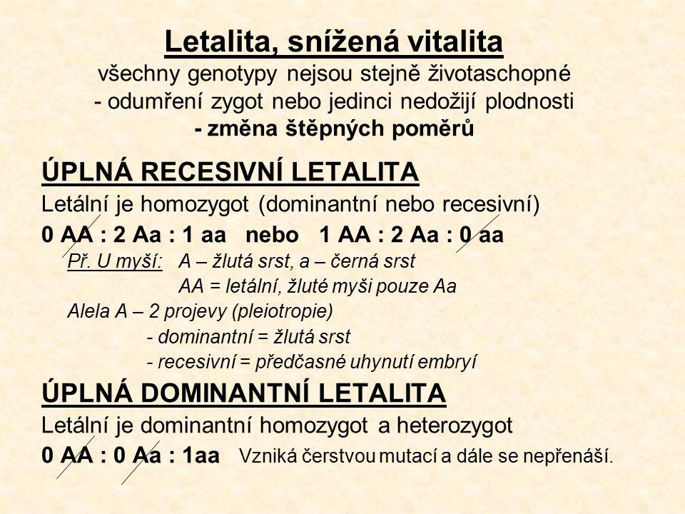 Letalita, snížená vitalita všechny genotypy nejsou stejně životaschopné - odumření zygot nebo jedinci nedožijí plodnosti - změna štěpných poměrů ÚPLNÁ RECESIVNÍ LETALITA Letální je homozygot (dominantní nebo recesivní) 0 AA : 2 Aa : 1 aa nebo 1 AA : 2 Aa : 0 aa Př.