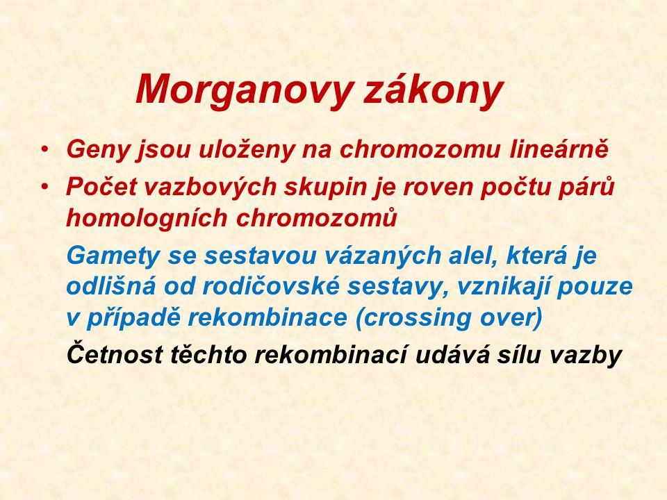 Morganovy zákony Geny jsou uloženy na chromozomu lineárně Počet vazbových skupin je roven počtu párů homologních chromozomů Gamety se sestavou vázanýc