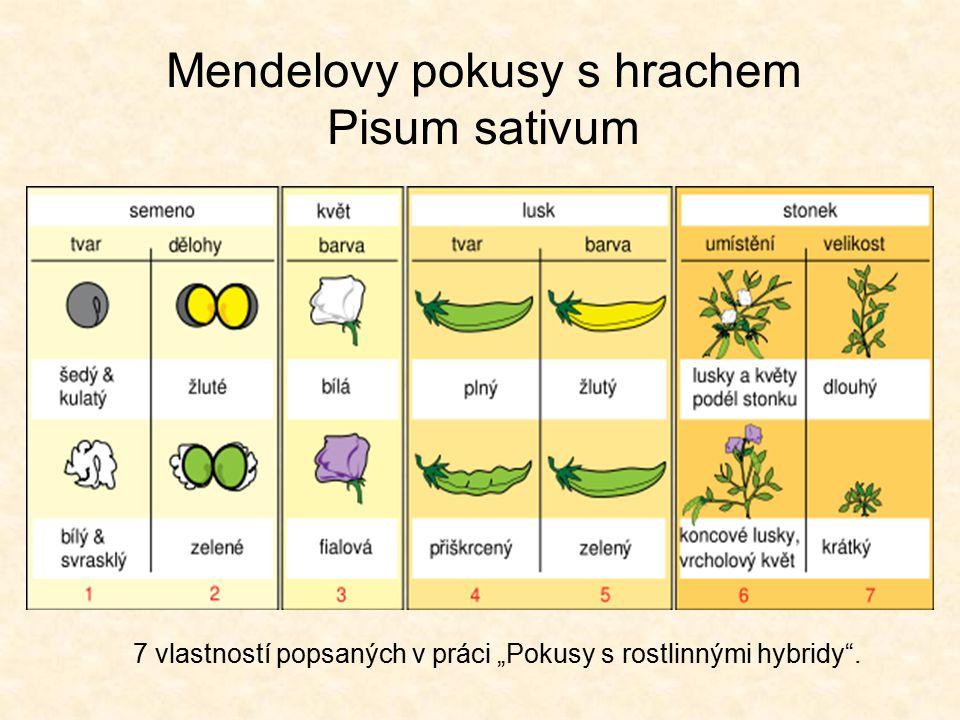 Termíny vlastnost (gen) – dědičný rys (barva květů) znak (alela) – každá varianta vlastnosti (fialová nebo bílá barva květů) hybrid – výsledek pěstování (hybridizace) - kříženec P generace (parentální – rodičovská generace) F 1 generace (první filiální - dceřiná generace) F 2 generace (druhá filiální - dceřiná generace) B 1 backcross – zpětné křížení (F 1 x rodič) Testcross – testovací/analytické křížení (PP or Pp x pp) monohybridní křížení – sledována pouze jedna vlastnost dihybridní křížení – sledovány dvě vlastnosti současně