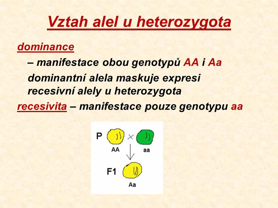 Vztah alel u heterozygota dominance – manifestace obou genotypů AA i Aa dominantní alela maskuje expresi recesivní alely u heterozygota recesivita – manifestace pouze genotypu aa