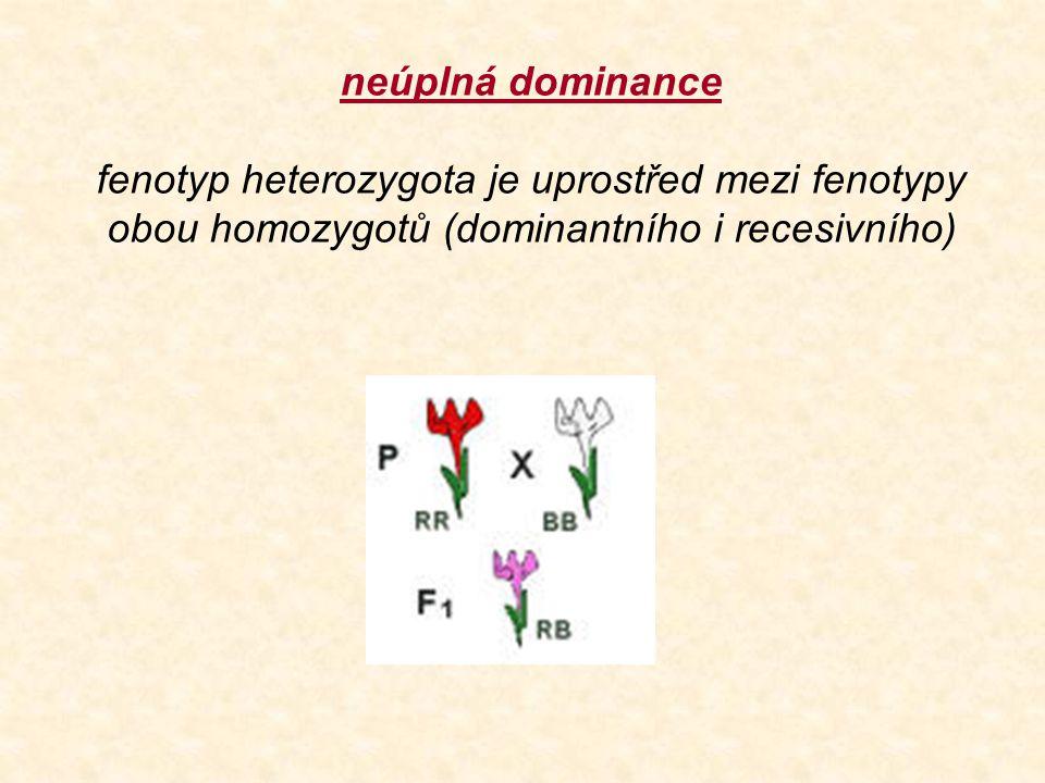 neúplná dominance fenotyp heterozygota je uprostřed mezi fenotypy obou homozygotů (dominantního i recesivního)