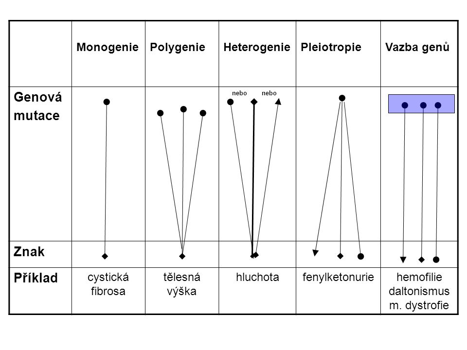 FENOTYP – pozorované biochemické, fyziologické a morfologické vlastnosti determinované genotypem a prostředím, ve kterém je daný genotyp exprimován genotyp + prostředí VLASTNOSTI : monogenní, kvalitativní - převaha genotypu – 1 gen velkého účinku (major gen) polygenní, kvantitativní, multifaktoriální - významný vliv prostředí – více genů malého a přídatného účinku (minor geny)