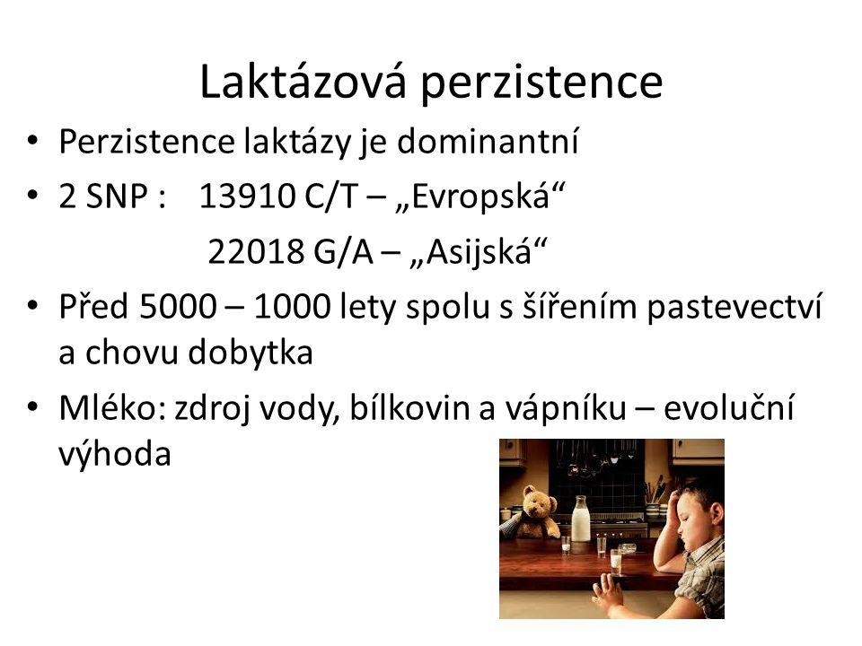 """Laktázová perzistence Perzistence laktázy je dominantní 2 SNP : 13910 C/T – """"Evropská"""" 22018 G/A – """"Asijská"""" Před 5000 – 1000 lety spolu s šířením pas"""