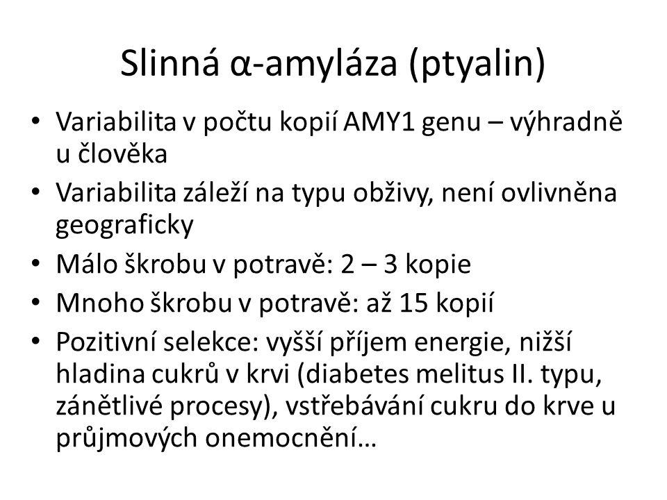 Slinná α-amyláza (ptyalin) Variabilita v počtu kopií AMY1 genu – výhradně u člověka Variabilita záleží na typu obživy, není ovlivněna geograficky Málo
