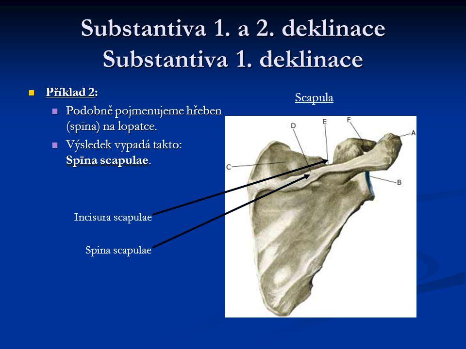 Substantiva 1.a 2. deklinace Substantiva 1.