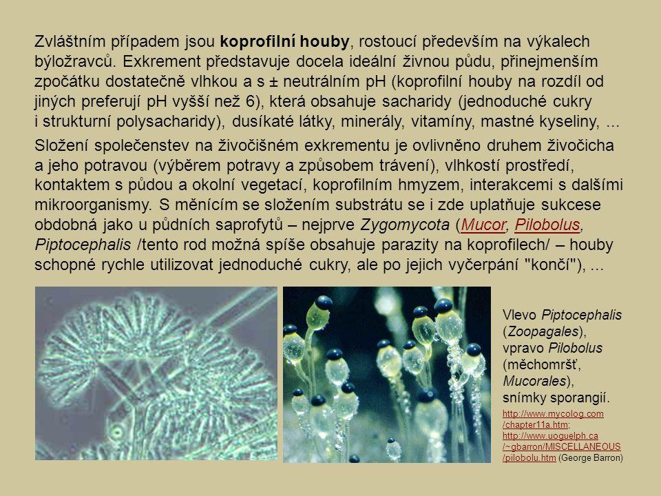 Zvláštním případem jsou koprofilní houby, rostoucí především na výkalech býložravců. Exkrement představuje docela ideální živnou půdu, přinejmenším zp