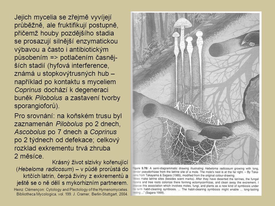 Jejich mycelia se zřejmě vyvíjejí průběžně, ale fruktifikují postupně, přičemž houby pozdějšího stadia se prosazují silnější enzymatickou výbavou a ča