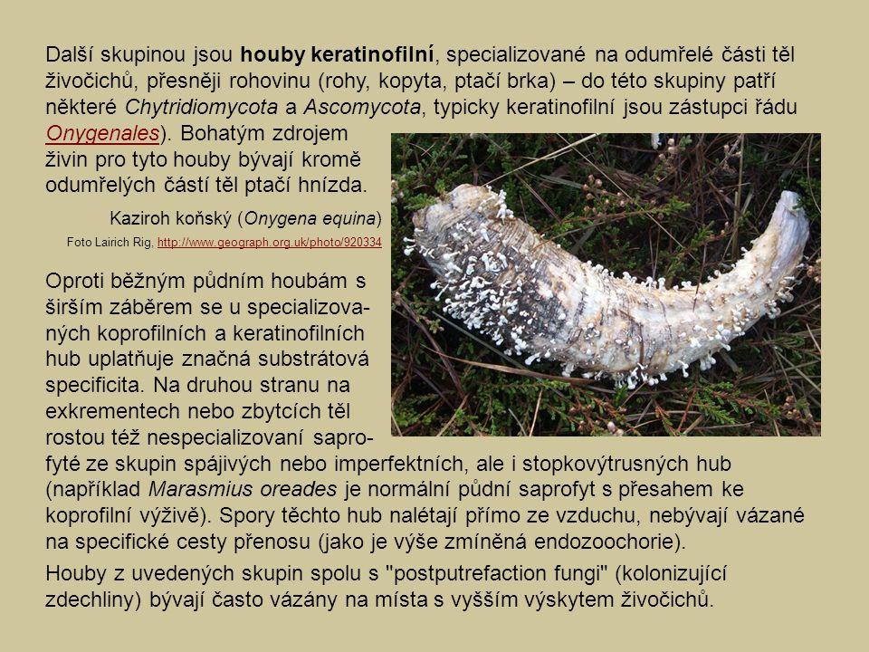 Další skupinou jsou houby keratinofilní, specializované na odumřelé části těl živočichů, přesněji rohovinu (rohy, kopyta, ptačí brka) – do této skupin