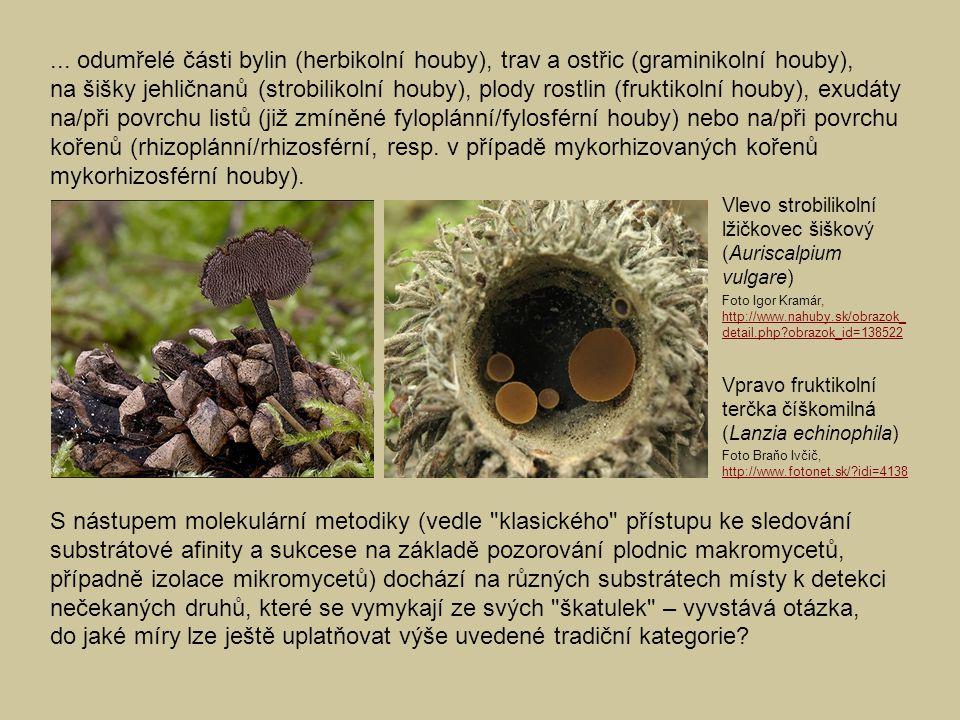 ... odumřelé části bylin (herbikolní houby), trav a ostřic (graminikolní houby), na šišky jehličnanů (strobilikolní houby), plody rostlin (fruktikolní