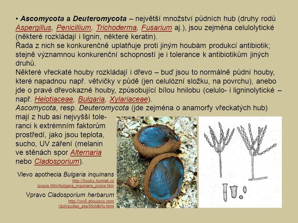 Ascomycota a Deuteromycota – největší množství půdních hub (druhy rodů Aspergillus, Penicillium, Trichoderma, Fusarium aj.), jsou zejména celulolytick