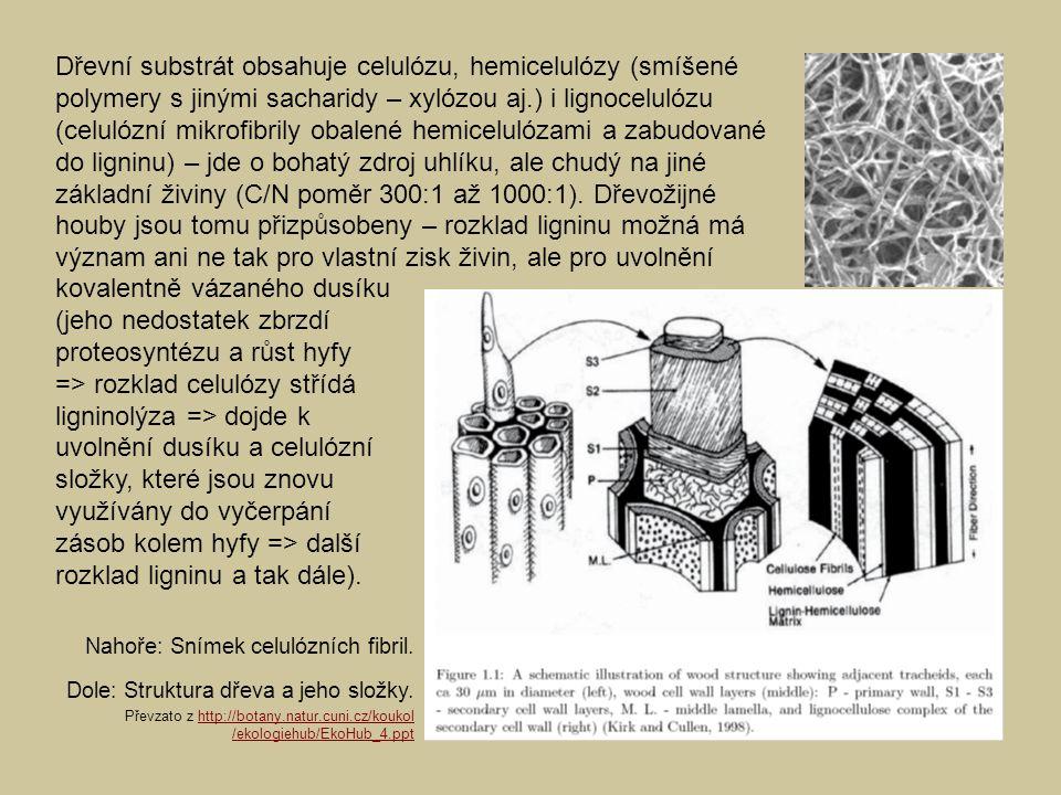 Dřevní substrát obsahuje celulózu, hemicelulózy (smíšené polymery s jinými sacharidy – xylózou aj.) i lignocelulózu (celulózní mikrofibrily obalené he