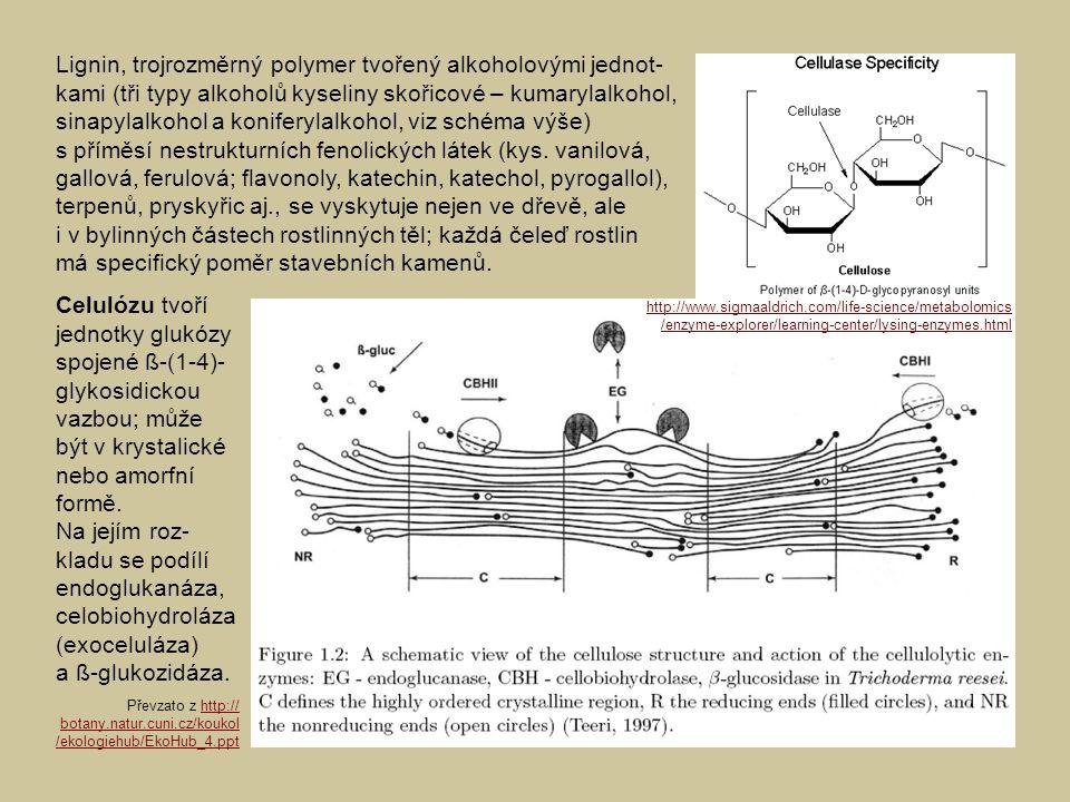 Lignin, trojrozměrný polymer tvořený alkoholovými jednot- kami (tři typy alkoholů kyseliny skořicové – kumarylalkohol, sinapylalkohol a koniferylalkoh