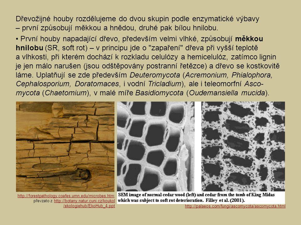 http://forestpathology.coafes.umn.edu/microbes.htmhttp://forestpathology.coafes.umn.edu/microbes.htm; převzato z http://botany.natur.cuni.cz/koukolhtt