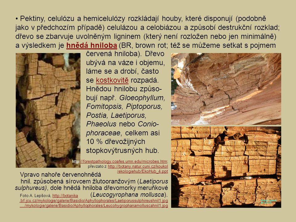Vpravo nahoře červenohnědá hnil. způsobená sírovcem žlutooranžovým (Laetiporus sulphureus), dole hnědá hniloba dřevomorky meruňkové (Leucogyrophana mo