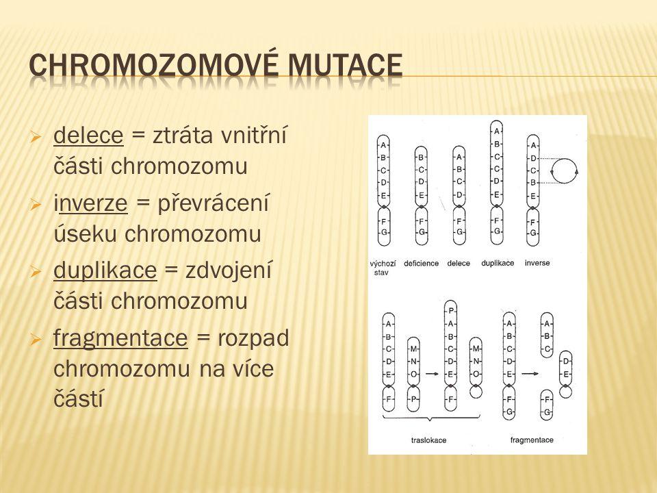  delece = ztráta vnitřní části chromozomu  inverze = převrácení úseku chromozomu  duplikace = zdvojení části chromozomu  fragmentace = rozpad chromozomu na více částí