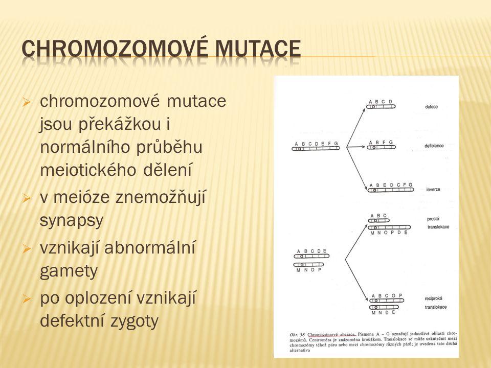  chromozomové mutace jsou překážkou i normálního průběhu meiotického dělení  v meióze znemožňují synapsy  vznikají abnormální gamety  po oplození vznikají defektní zygoty