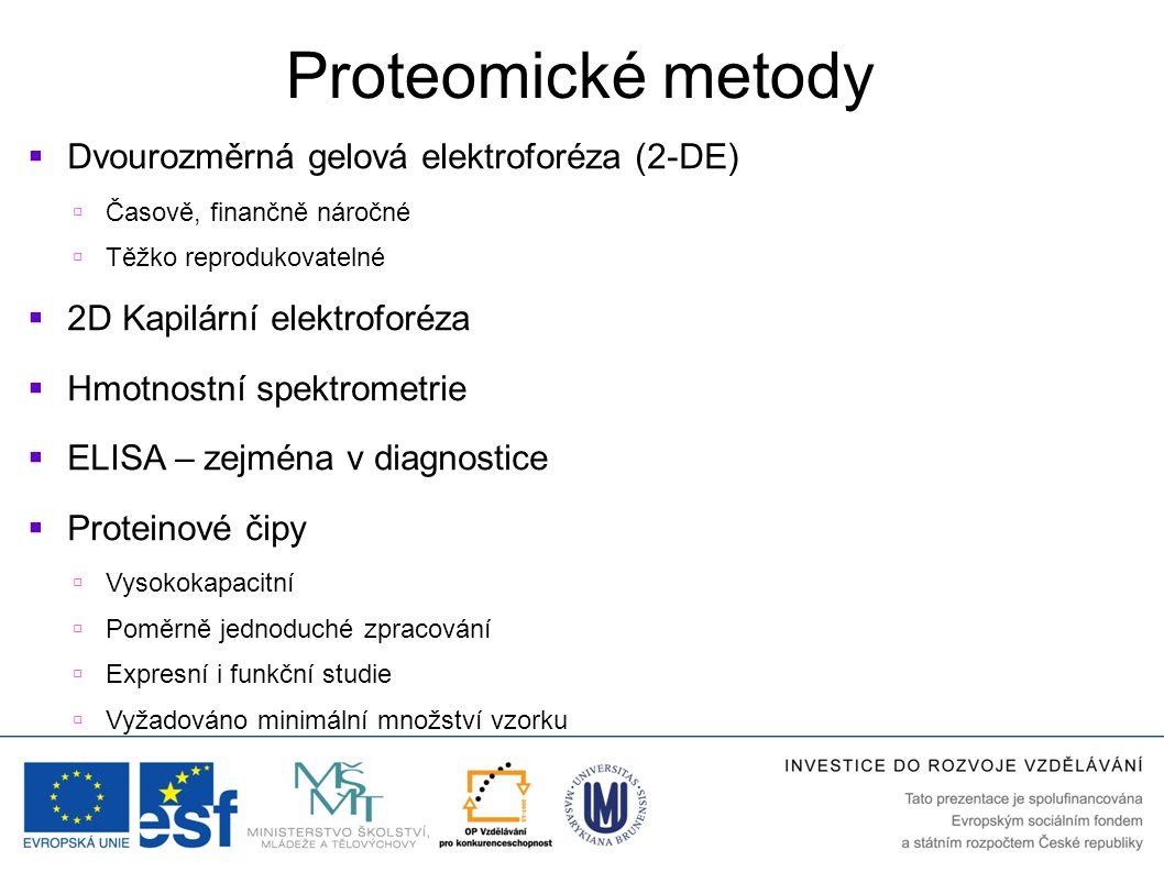 Proteomické metody  Dvourozměrná gelová elektroforéza (2-DE)  Časově, finančně náročné  Těžko reprodukovatelné  2D Kapilární elektroforéza  Hmotn