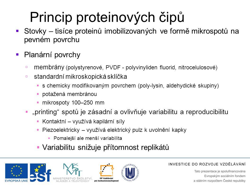 Princip proteinových čipů  Stovky – tisíce proteinů imobilizovaných ve formě mikrospotů na pevném povrchu  Planární povrchy  membrány (polystyrenov
