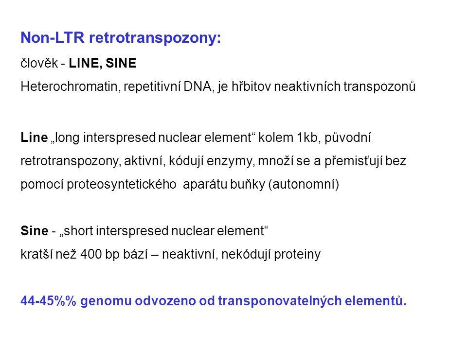 """Non-LTR retrotranspozony: člověk - LINE, SINE Heterochromatin, repetitivní DNA, je hřbitov neaktivních transpozonů Line """"long interspresed nuclear ele"""