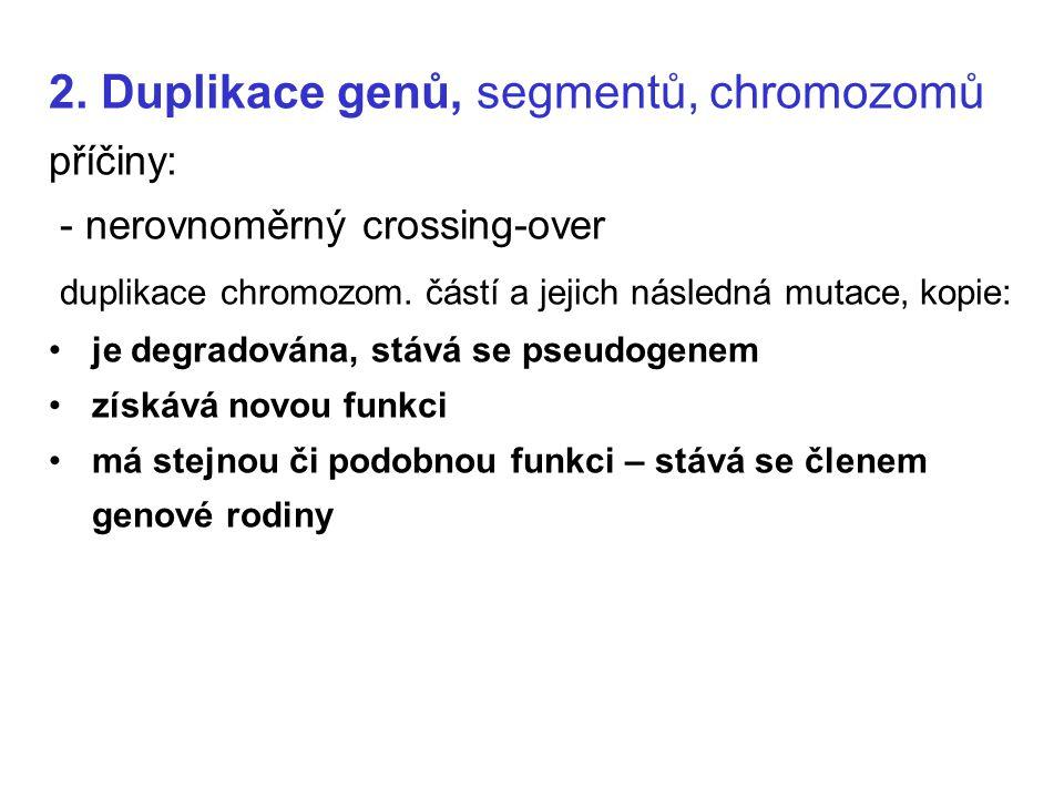 2. Duplikace genů, segmentů, chromozomů příčiny: - nerovnoměrný crossing-over duplikace chromozom. částí a jejich následná mutace, kopie: je degradová
