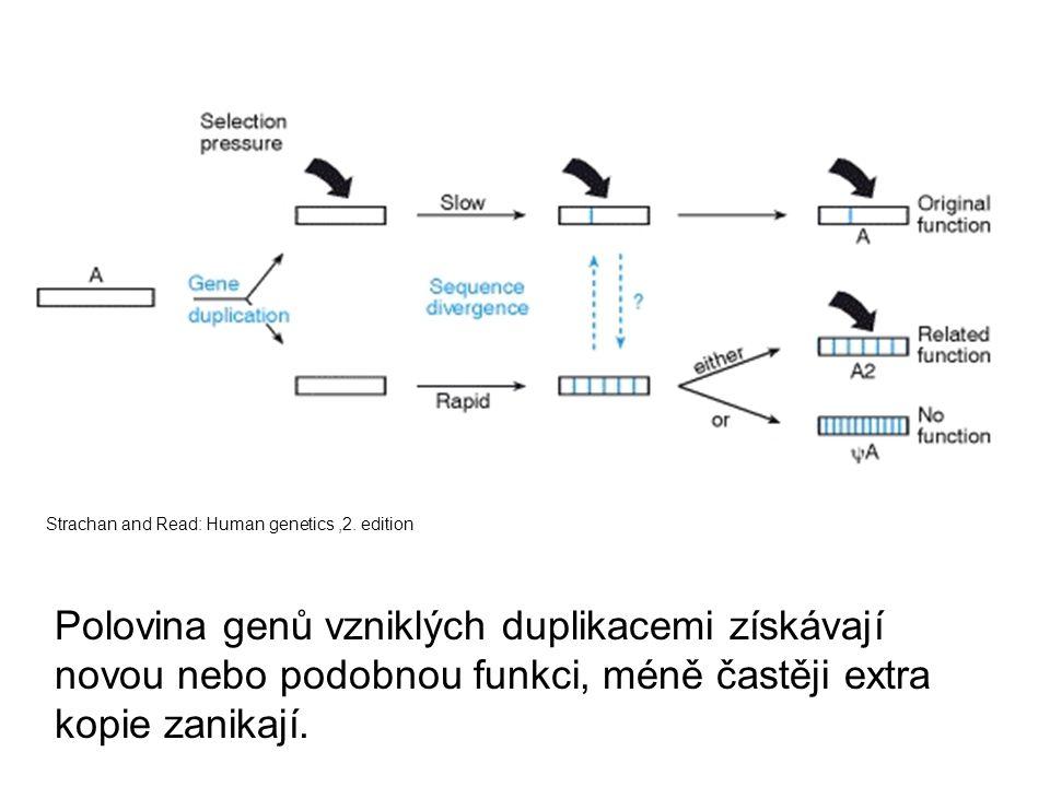 Strachan and Read: Human genetics,2. edition Polovina genů vzniklých duplikacemi získávají novou nebo podobnou funkci, méně častěji extra kopie zanika