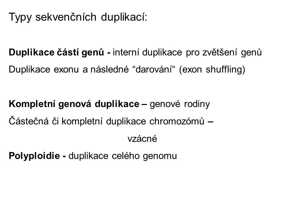 """Typy sekvenčních duplikací: Duplikace částí genů - interní duplikace pro zvětšení genů Duplikace exonu a následné """"darování"""" (exon shuffling) Kompletn"""