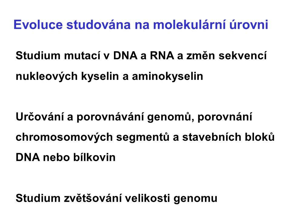 Evoluce studována na molekulární úrovni Studium mutací v DNA a RNA a změn sekvencí nukleových kyselin a aminokyselin Určování a porovnávání genomů, po