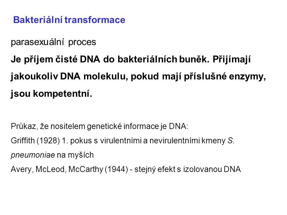 Bakteriální transformace parasexuální proces Je příjem čisté DNA do bakteriálních buněk. Přijímají jakoukoliv DNA molekulu, pokud mají příslušné enzym
