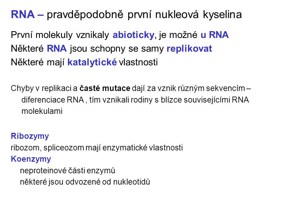 RNA – pravděpodobně první nukleová kyselina První molekuly vznikaly abioticky, je možné u RNA Některé RNA jsou schopny se samy replikovat Některé mají