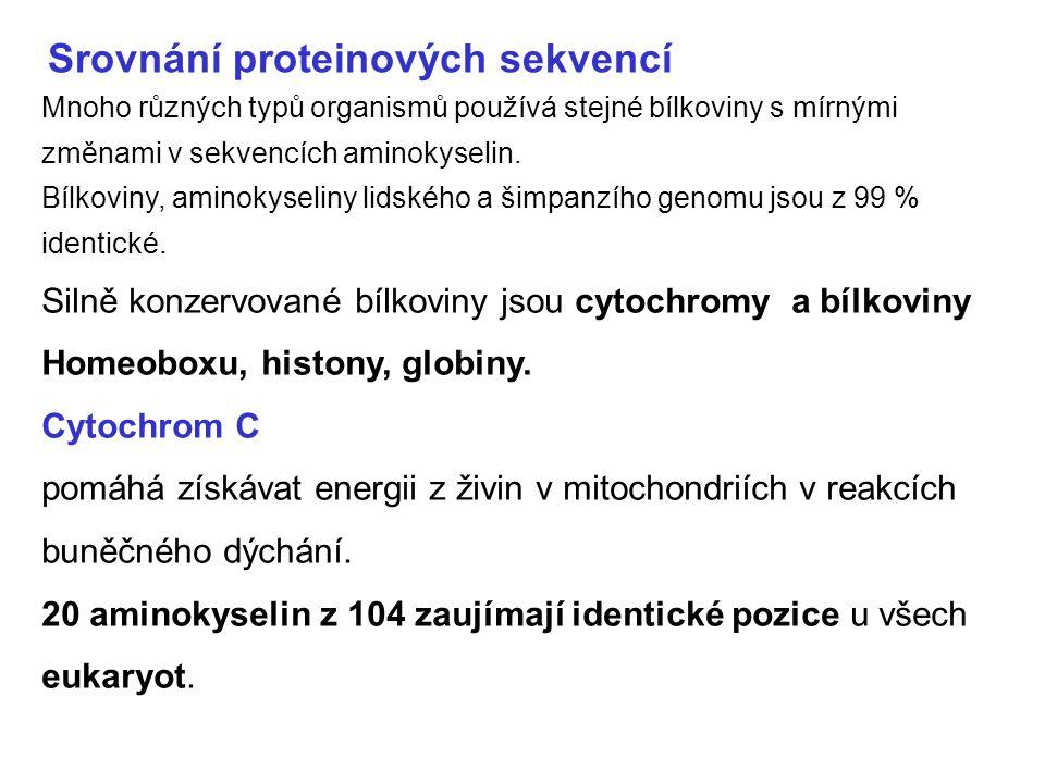 bílkoviny Homeoboxu 60 aminokyselinová sekvence tzv.