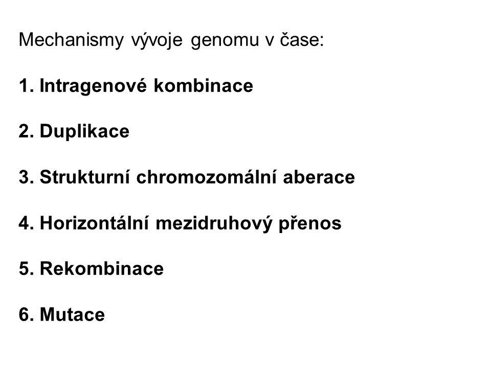 Mechanismy vývoje genomu v čase: 1. Intragenové kombinace 2. Duplikace 3. Strukturní chromozomální aberace 4. Horizontální mezidruhový přenos 5. Rekom