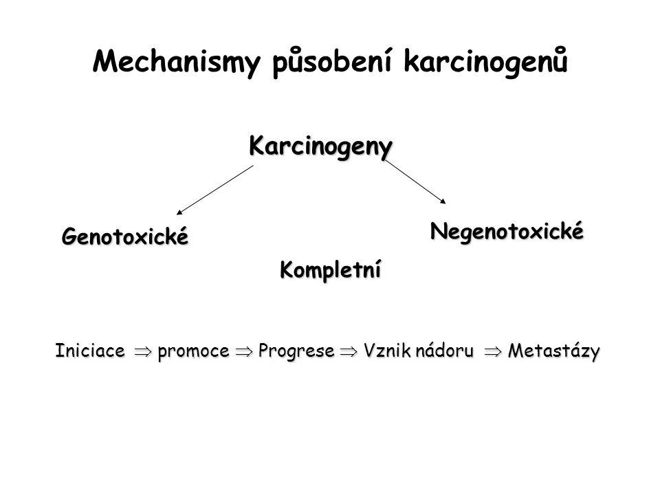 Mechanismy působení karcinogenů Karcinogeny Genotoxické Negenotoxické Kompletní Iniciace  promoce  Progrese  Vznik nádoru  Metastázy
