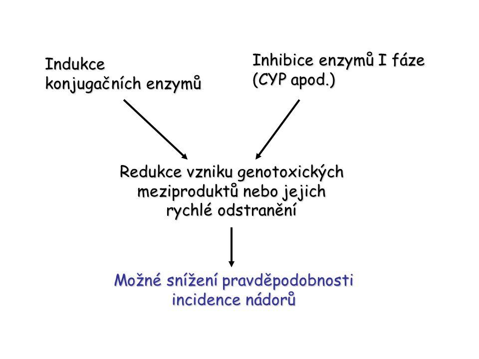Indukce konjugačních enzymů Inhibice enzymů I fáze (CYP apod.) Redukce vzniku genotoxických meziproduktů nebo jejich rychlé odstranění Možné snížení p