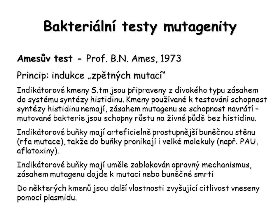 """Bakteriální testy mutagenity Amesův test - Prof. B.N. Ames, 1973 Princip: indukce """"zpětných mutací"""" Indikátorové kmeny S.tm jsou připraveny z divokého"""