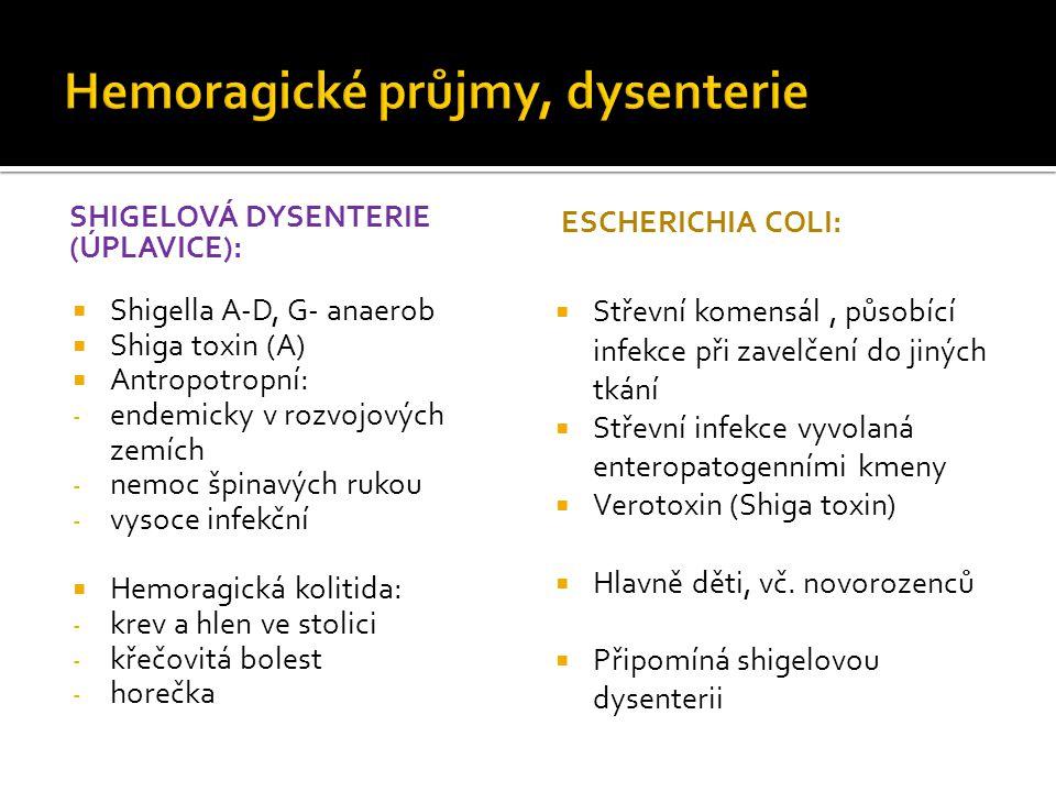 SHIGELOVÁ DYSENTERIE (ÚPLAVICE):  Shigella A-D, G- anaerob  Shiga toxin (A)  Antropotropní: - endemicky v rozvojových zemích - nemoc špinavých rukou - vysoce infekční  Hemoragická kolitida: - krev a hlen ve stolici - křečovitá bolest - horečka ESCHERICHIA COLI:  Střevní komensál, působící infekce při zavelčení do jiných tkání  Střevní infekce vyvolaná enteropatogenními kmeny  Verotoxin (Shiga toxin)  Hlavně děti, vč.