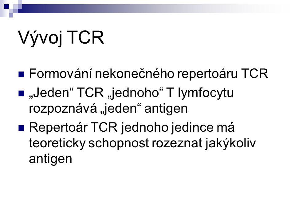 """Vývoj TCR Formování nekonečného repertoáru TCR """"Jeden"""" TCR """"jednoho"""" T lymfocytu rozpoznává """"jeden"""" antigen Repertoár TCR jednoho jedince má teoretick"""