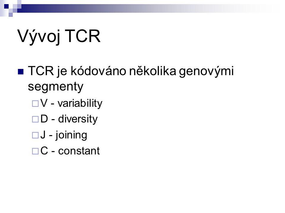 Vývoj TCR TCR je kódováno několika genovými segmenty  V - variability  D - diversity  J - joining  C - constant