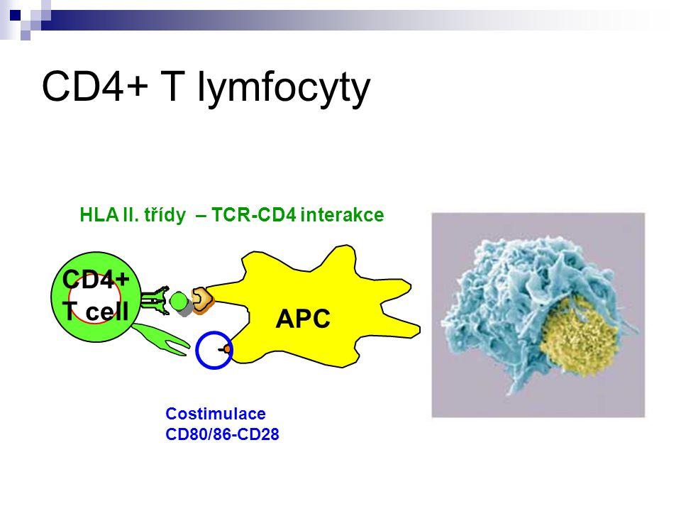 CD4+ T lymfocyty CD4+ T cell APC HLA II. třídy – TCR-CD4 interakce Costimulace CD80/86-CD28