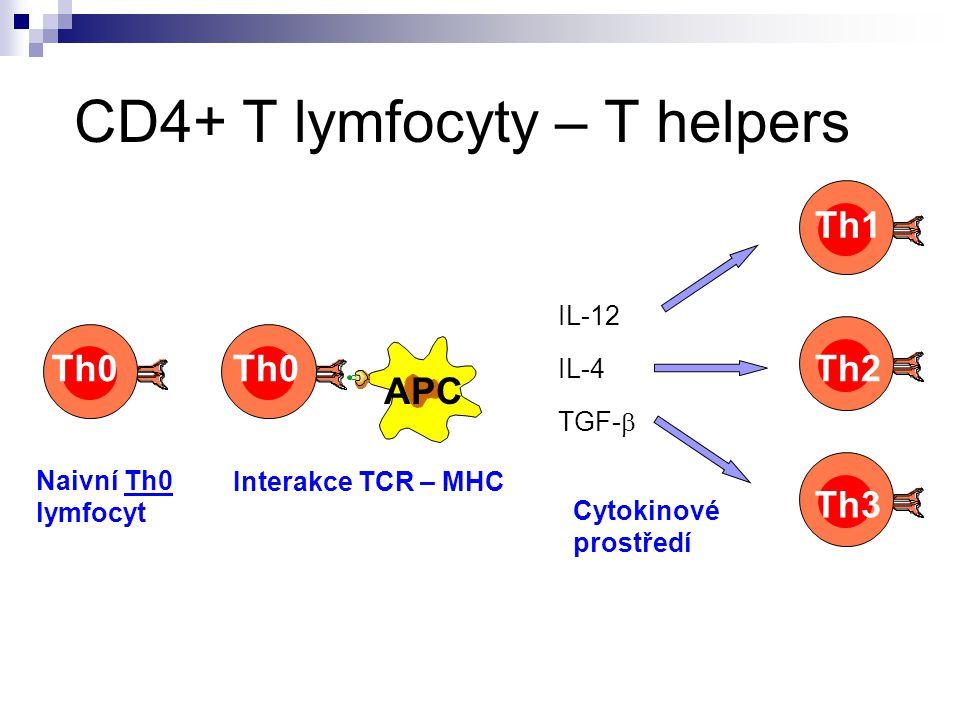 CD4+ T lymfocyty – T helpers Naivní Th0 lymfocyt Interakce TCR – MHC Cytokinové prostředí IL-12 IL-4 TGF-  Th1 Th2 Th3 Th0 APC