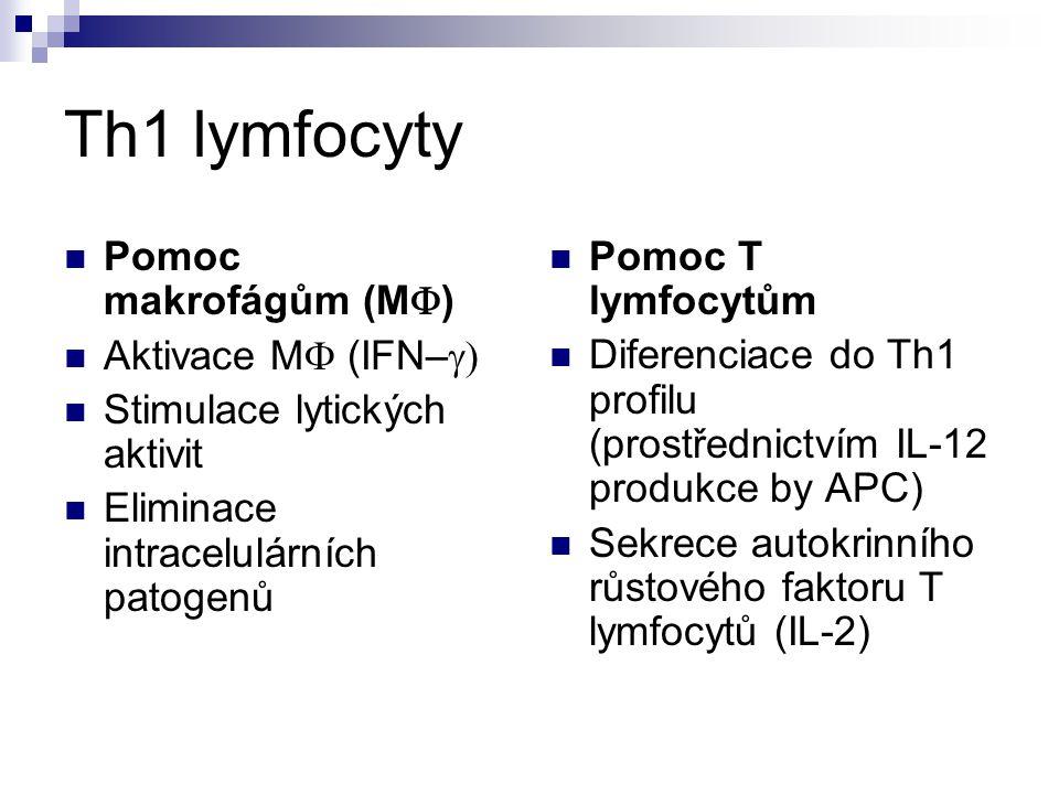Th1 lymfocyty Pomoc makrofágům (M  ) Aktivace M  (IFN–  Stimulace lytických aktivit Eliminace intracelulárních patogenů Pomoc T lymfocytům Diferen
