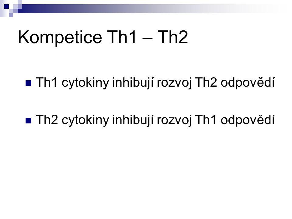 Kompetice Th1 – Th2 Th1 cytokiny inhibují rozvoj Th2 odpovědí Th2 cytokiny inhibují rozvoj Th1 odpovědí Th3