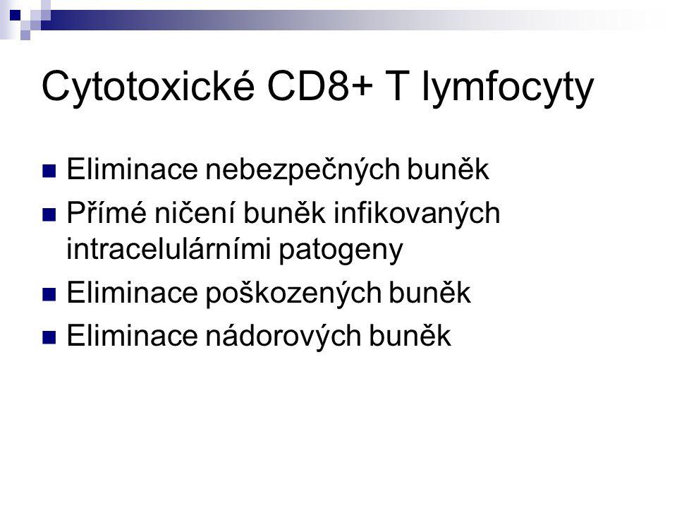 Cytotoxické CD8+ T lymfocyty Eliminace nebezpečných buněk Přímé ničení buněk infikovaných intracelulárními patogeny Eliminace poškozených buněk Elimin