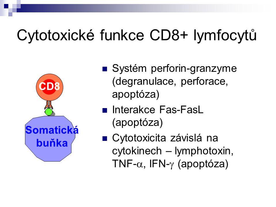 Cytotoxické funkce CD8+ lymfocytů Systém perforin-granzyme (degranulace, perforace, apoptóza) Interakce Fas-FasL (apoptóza) Cytotoxicita závislá na cy