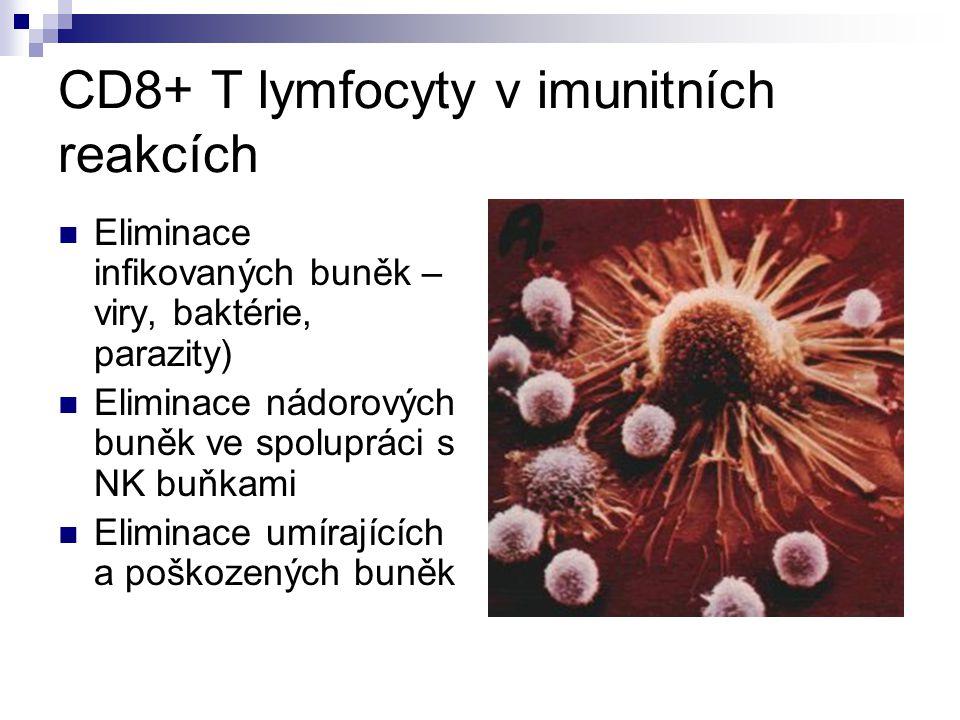 CD8+ T lymfocyty v imunitních reakcích Eliminace infikovaných buněk – viry, baktérie, parazity) Eliminace nádorových buněk ve spolupráci s NK buňkami