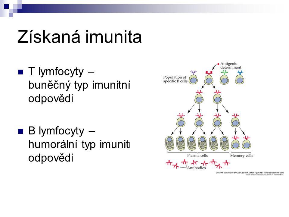 T lymfocyty – buněčný typ imunitní odpovědi B lymfocyty – humorální typ imunitní odpovědi