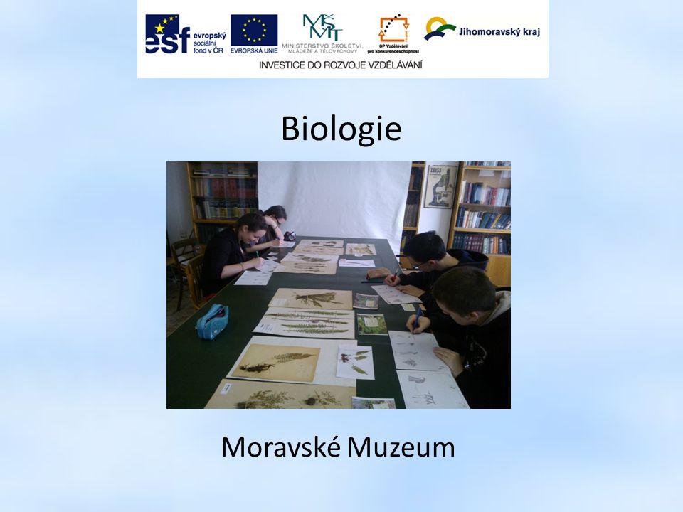 Biologie Moravské Muzeum