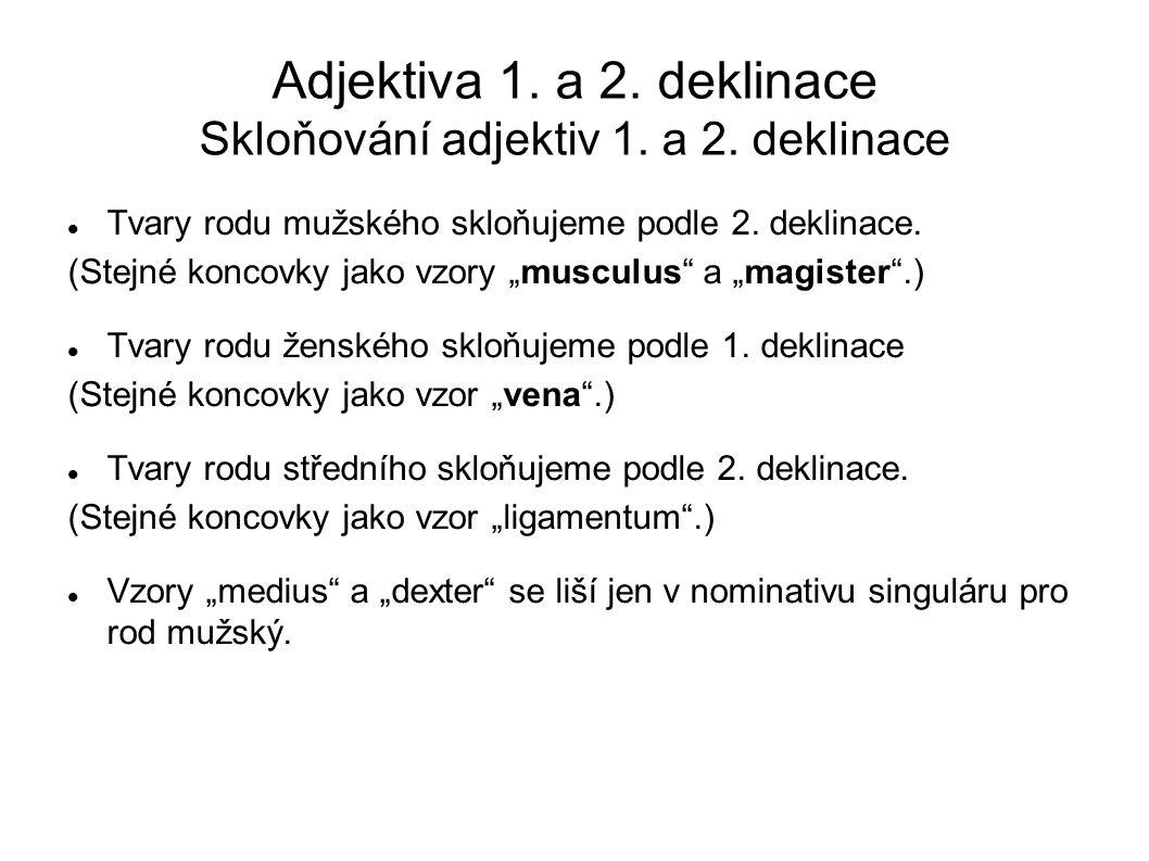 Adjektiva 1.a 2. deklinace Skloňování adjektiv 1.
