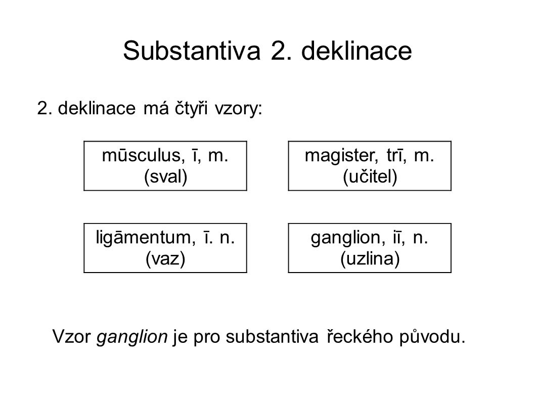 Substantiva 2.deklinace 2. deklinace má čtyři vzory: mūsculus, ī, m.