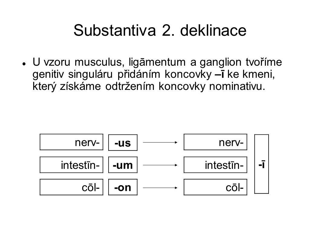Adjektiva 1.a 2. deklinace Slovníkový tvar Slovníkový tvar adjektiv 1.